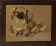 Framed Print of Pekingese Dog