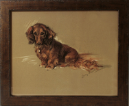 Framed Print of Longhaired Dachshund