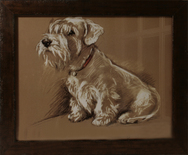 Framed Print of West Highland Terrier