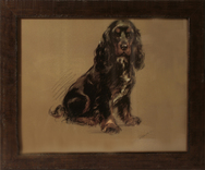 Framed Print of Cocker Spaniel