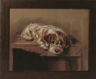 Framed Print of Rough Haired Terrier