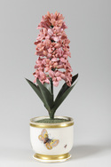 Porcelain Hyacinth